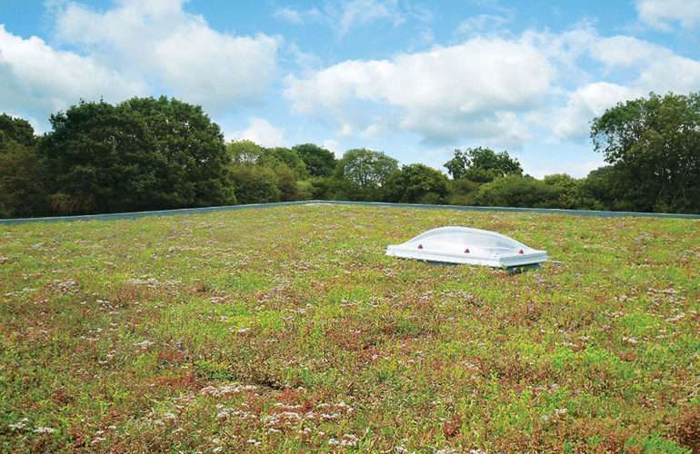 Green Roof Cambridge